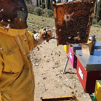 /images/0/1/01-apicoltore--parco-delle-api.jpg