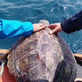 /images/0/4/04-tartaruga-b.jpe
