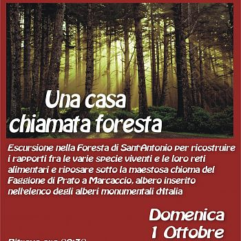 /images/0/5/05-una-casa-chiamata-foresta.jpg