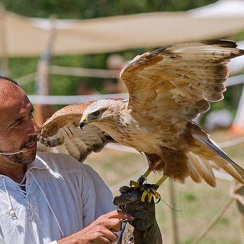/images/0/6/06-spettacolo-falconeria.jpg