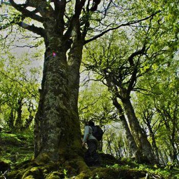 /images/1/1/11-faggio-monumentale-foreste-casentinesi--immagine-di-nevio-agostini--pnfc.jpg
