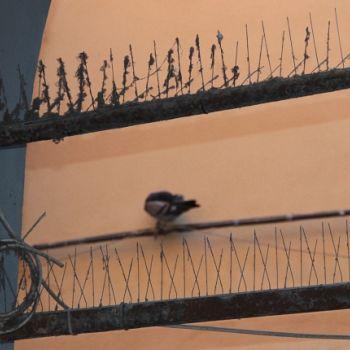 /images/1/6/16-2020-11-18-piccioni-borgo-03.jpg