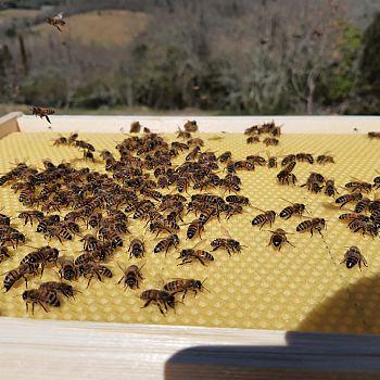 /images/1/7/17-parco-delle-api.jpg
