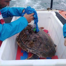 /images/1/8/18-tartaruga.jpe