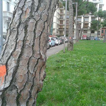 /images/2/0/20-vittoria-alberi--5-.jpg