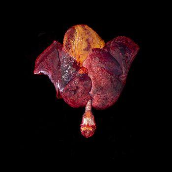 /images/2/5/25-betty-colombo-flower-uomo.jpeg
