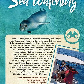 /images/2/5/25-seawatching-capraia-scelta-mod.jpg