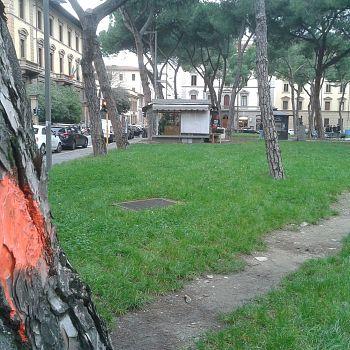 /images/2/5/25-vittoria-alberi--2-.jpg