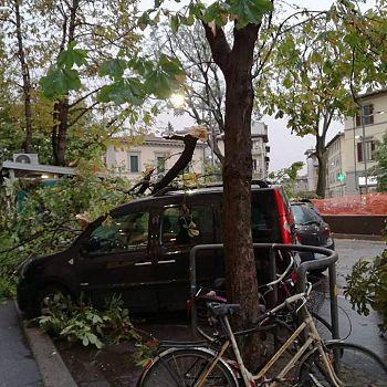 /images/2/8/28-piazza-tanucci-alberi.jpg