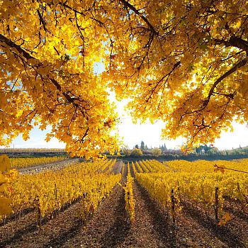/images/3/4/34-chianti-in-autunno.jpg