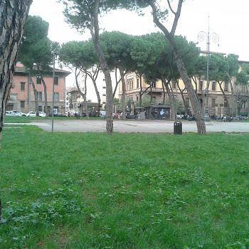 /images/3/5/35-vittoria-alberi--4-.jpg