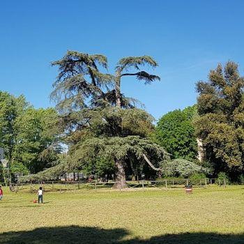 /images/4/1/41-pratone-alberato-ovest-parco-villa-favard-rovezzano.jpg