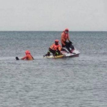 /images/5/1/51-delfino-spiaggiato.jpg