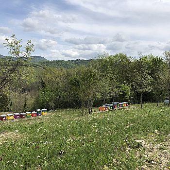 /images/5/2/52-parco-delle-api-l.jpg