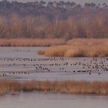/images/5/5/55-riserva-naturale-le-morette--foto-alessio-bartolini-.jpg