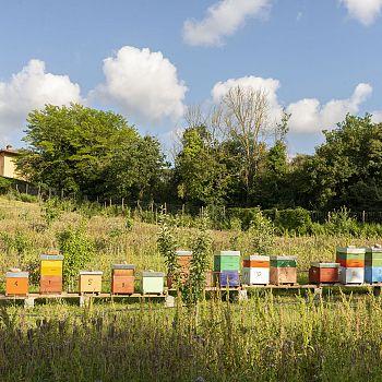 /images/5/9/59-bucolica-apiario-21-foto-di-alisa-martynova.jpg