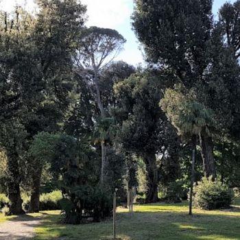 /images/6/3/63-viale-alberato-sud-parco-villa-favard-rovezzano--1-.jpg