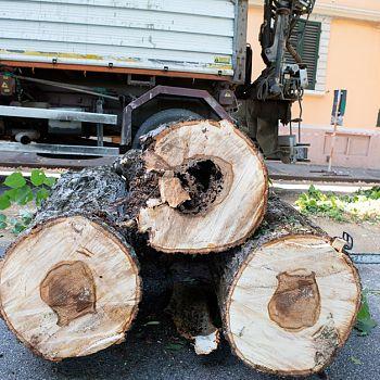 /images/6/7/67-rimozione-alberi-viale-iv-novembre-1120.jpg