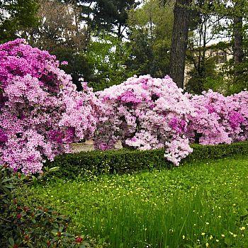 /images/7/0/70-orto-botanico-azalee-fioritura-2014.jpg