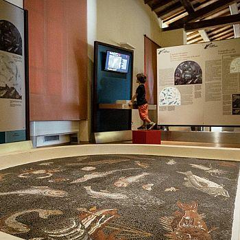 /images/7/3/73-museo-archeologico-del-territorio-di-populonia---mosaico-dei-pesci-con-postazione-multimediale.jpg