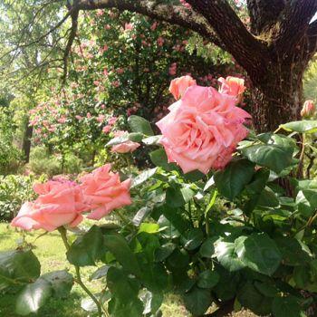 /images/7/6/76-orto-botanico-rose.jpg